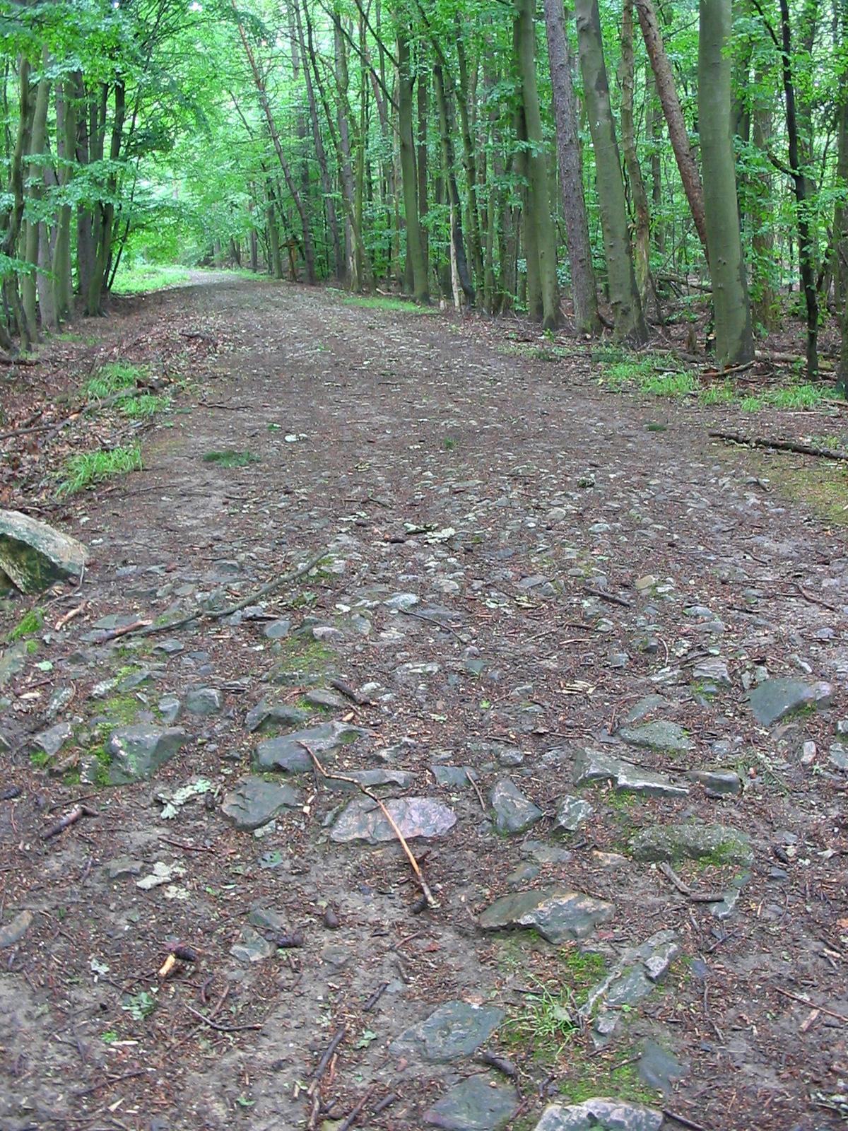 Römerstraße | Erlebnispfad Binger Wald